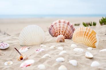 beach-2879929_640.jpg