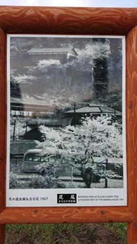 花の渡良瀬五日荘.jpg