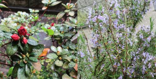 春雨に咲く庭.jpg