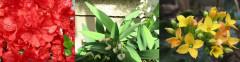21.04.03の庭.jpg