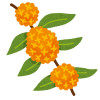 flower_kinmokusei.png
