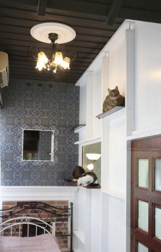 猫部屋37 (2).jpg