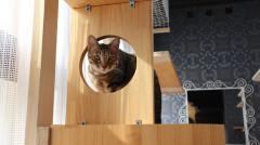 猫 タワー.jpg