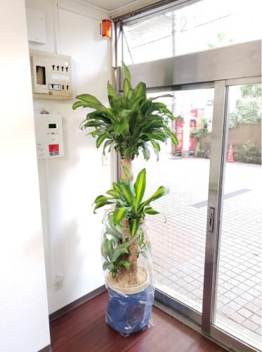 幸福の木.JPG