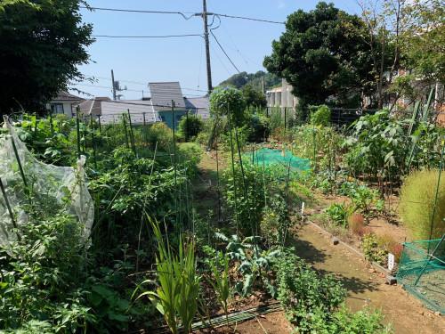 菜園.jpeg