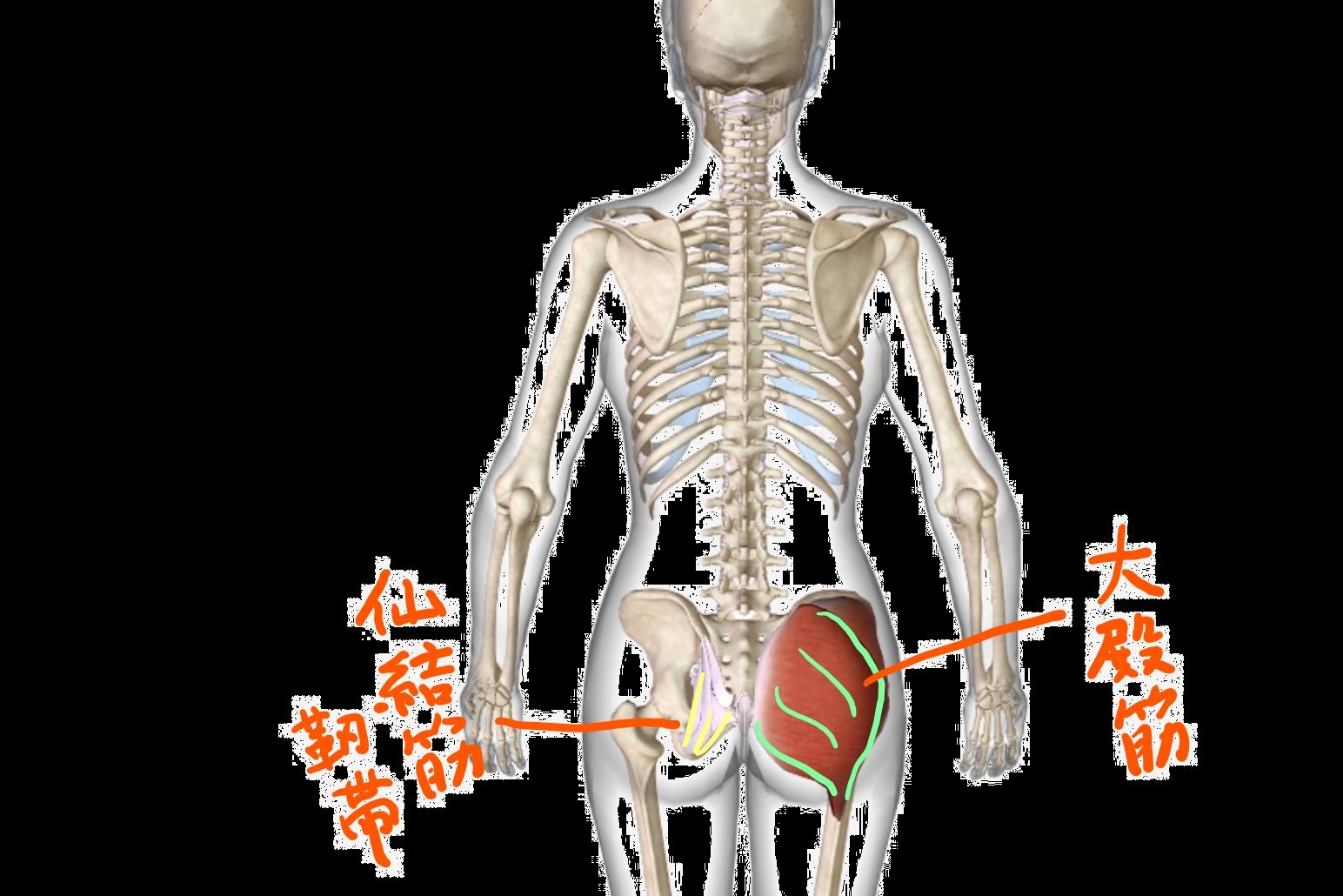 骨盤ケアで出会う謎の存在と筋膜リリース
