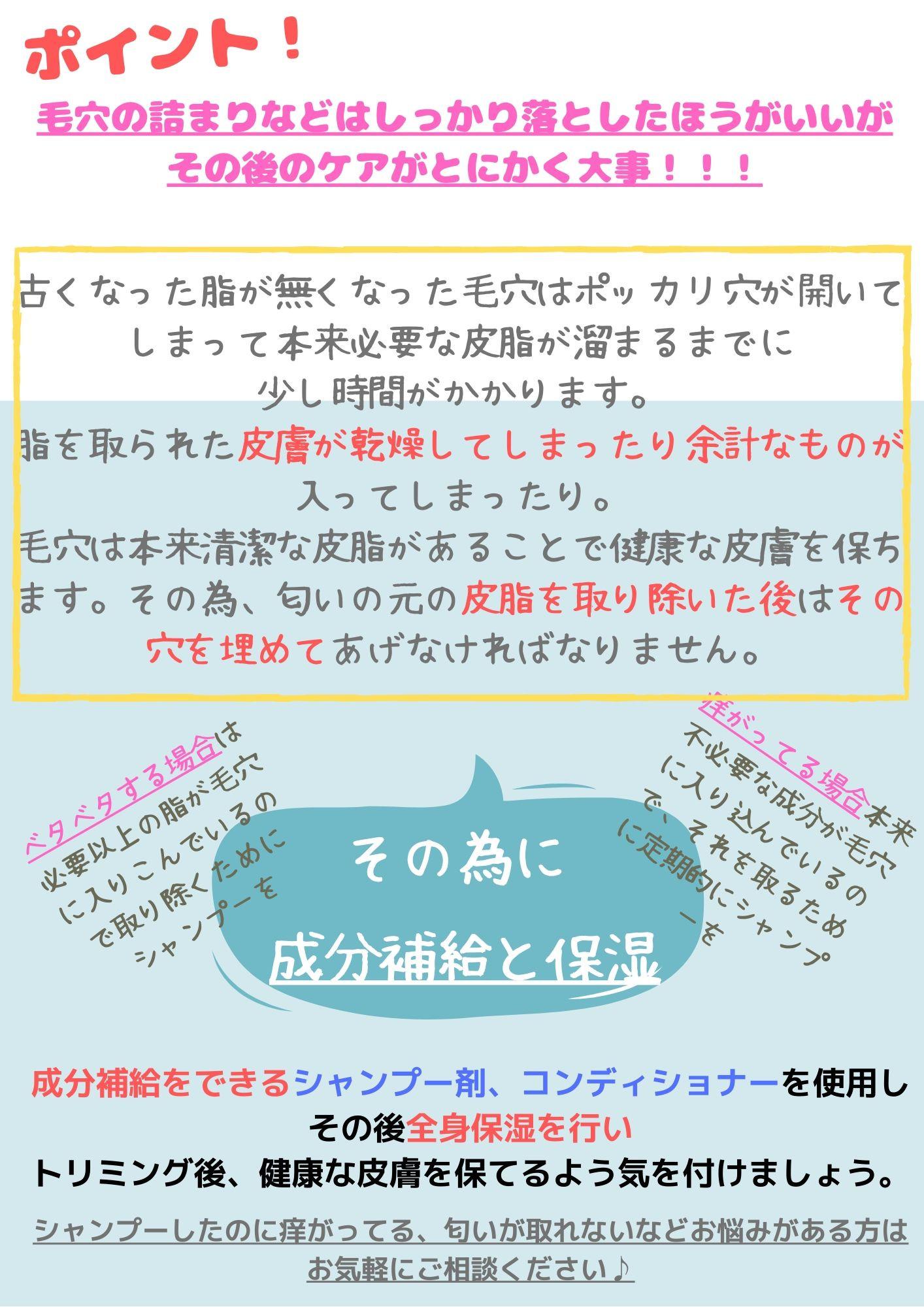 短毛種シャンプー2.jpg