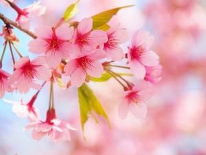 3月は卒業や入学のシーズン(中央林間校まりな先生ブログ)