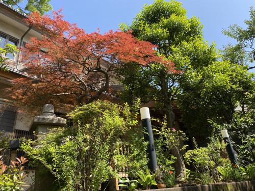 清明庵の庭.jpeg