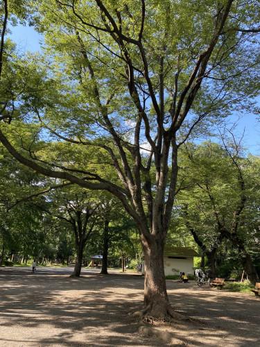210717善福寺公園.jpg