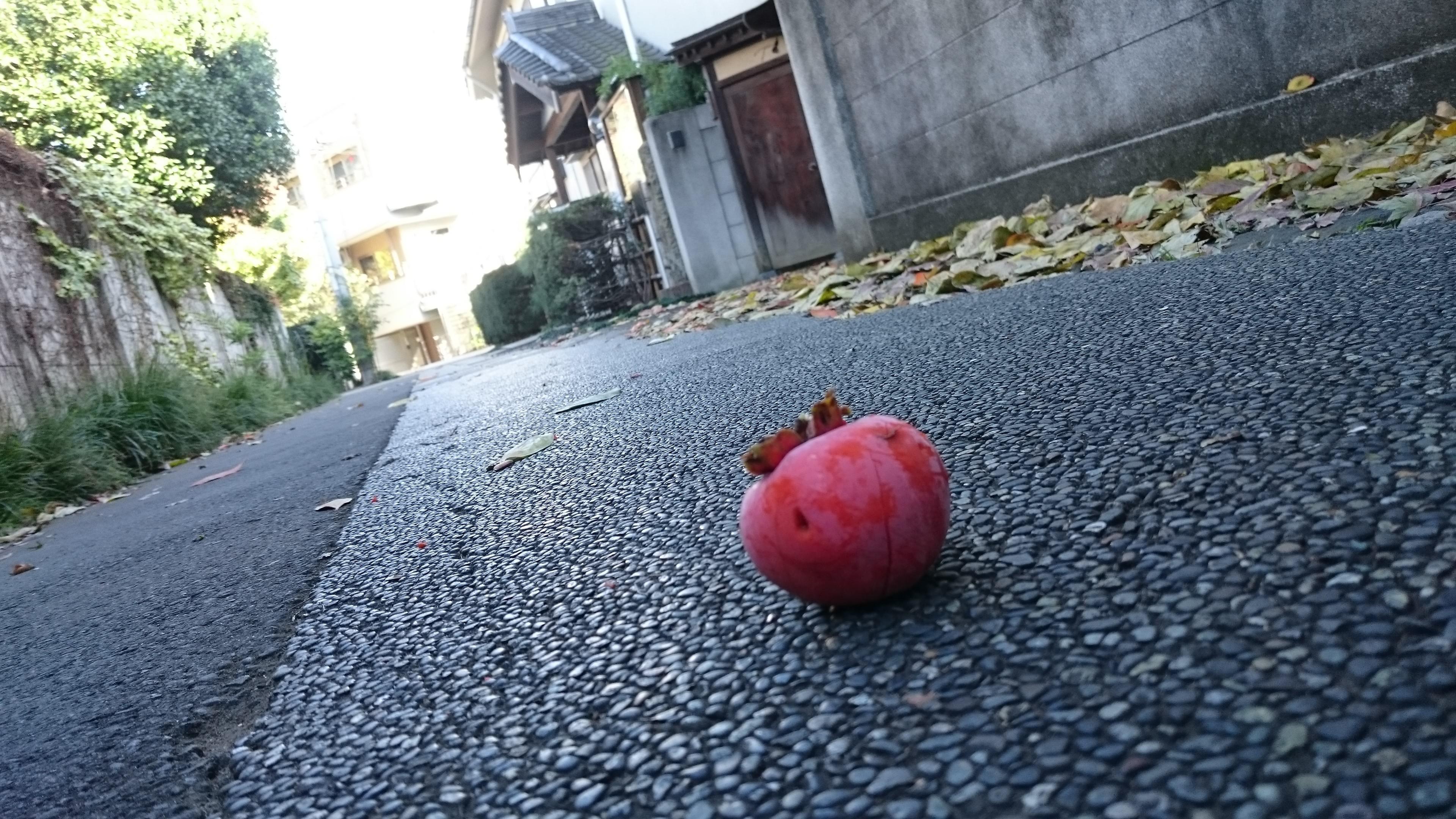 柿(擇木道場前の道路)ななめから写した画像.jpg