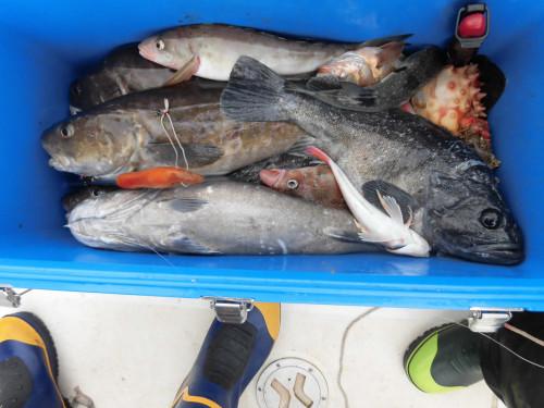 根魚、ミズクサカレイ釣り
